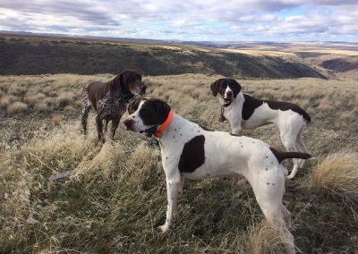 three dogs staying still on a hill