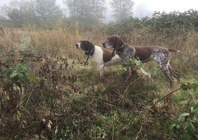 two dogs staying in the bushes of a large field and looking ahead