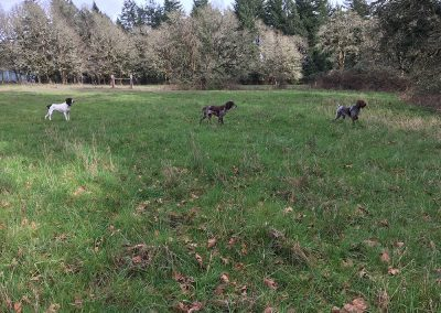 three dogs on a large grass field