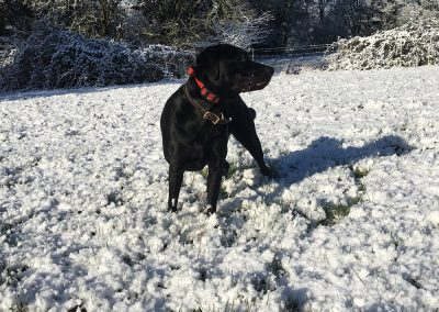 black dog standing on a snowy field and looking on the left