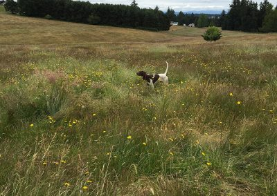 a white brown dog standing on a field among flowers in Salem, Oregon