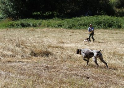 Dave Bale training dogs on a large field in Salem, Oregon