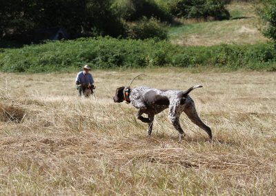 Dave Bale looking at a dog while undergoing an upland hunting training