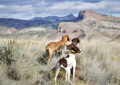 three dogs looking ahead towards high hills