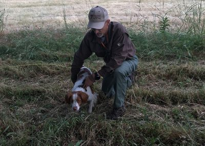 Dave Bale preparing a brown-white dog for an upland hunting training