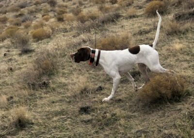 Dog running in hills