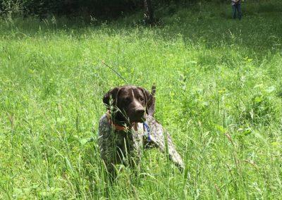 Dog hidden in tall grass