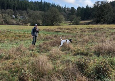 Dog playing with owner in field