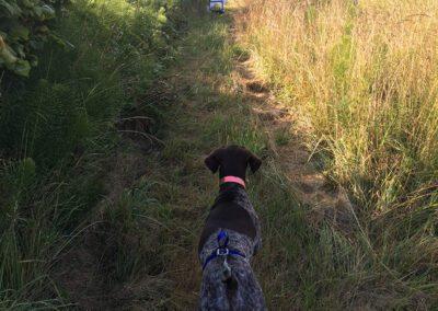 Dog on a path
